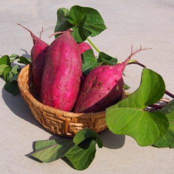 サツマイモの選び方|ねっとり系とほくほく系どっちを選ぶ?
