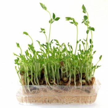 更年期に摂ってみて!豆苗に豊富なβカロテンと気になる栄養素